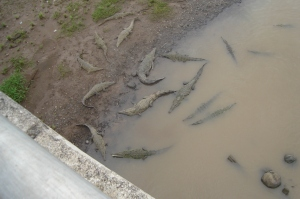 """Our driver also stopped off so we could see the """"croc bridge."""""""